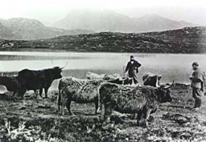 Photograph of Highland Drovers